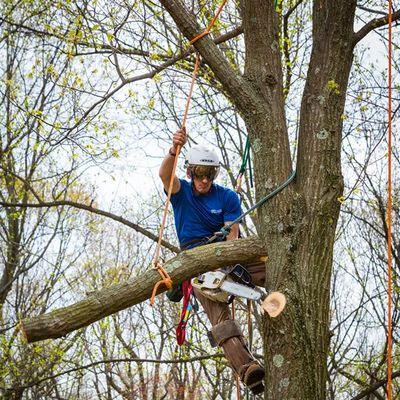 Avatar for The Tree Connection, LLC Coatesville, PA Thumbtack