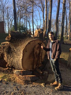 Avatar for Economy Stump Removal Millersville, MD Thumbtack