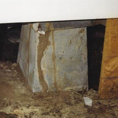 Formosan Termite shelter tube