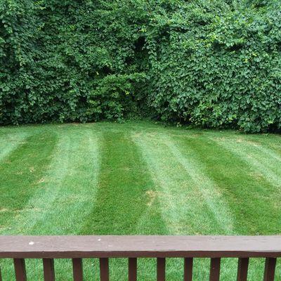Avatar for Matt's Miracle Lawn Franklin, OH Thumbtack