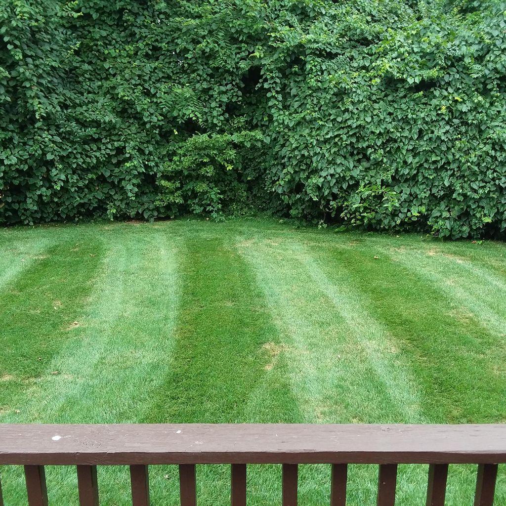 Matt's Miracle Lawn