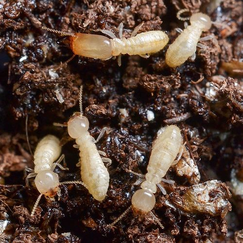 Termite Elimination
