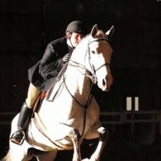 Avatar for Horse haven farm Berryville, VA Thumbtack