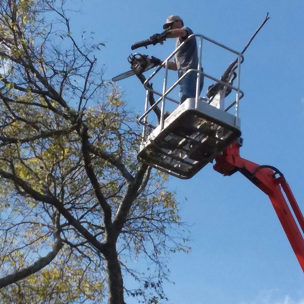 L&M Lawn Care and Tree Service