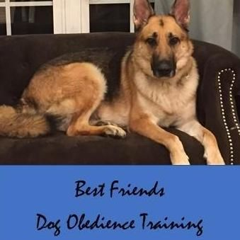 Avatar for Best Friends Dog Obedience Training