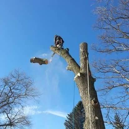 Spartan Tree Care LLC