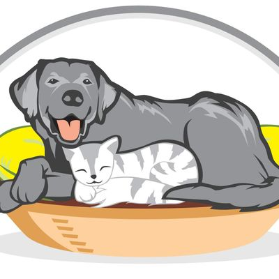Avatar for Rock Nest Training and Pet Care