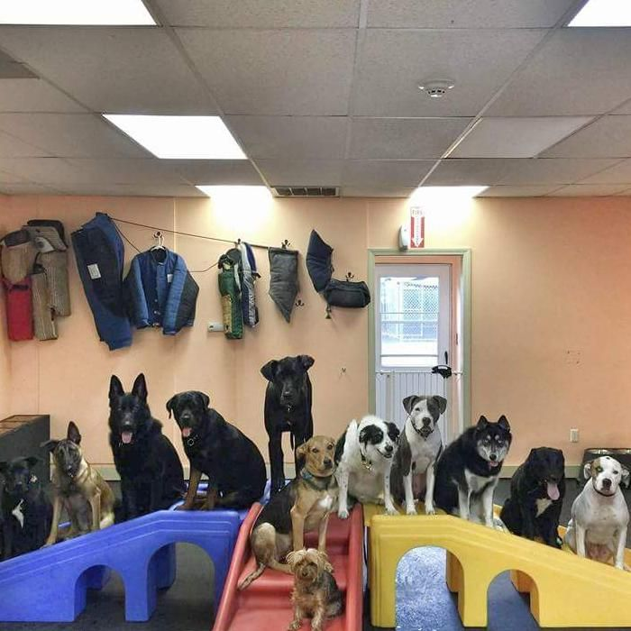 K9's Training and Doggy Daycare
