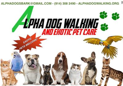 Avatar for Alpha Dog Walking & Exotic Pet Care Yonkers, NY Thumbtack