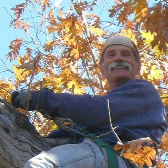Carter Tree Service