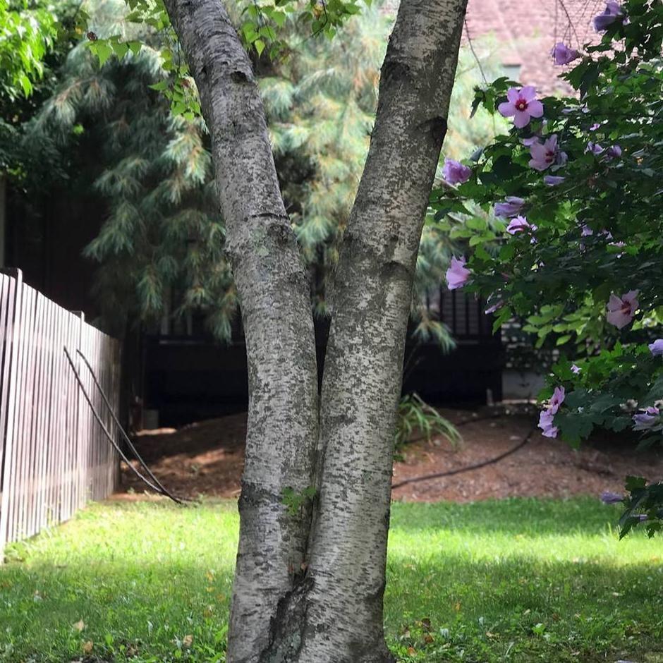 Yardstick Tree & Site Preservation Inc.