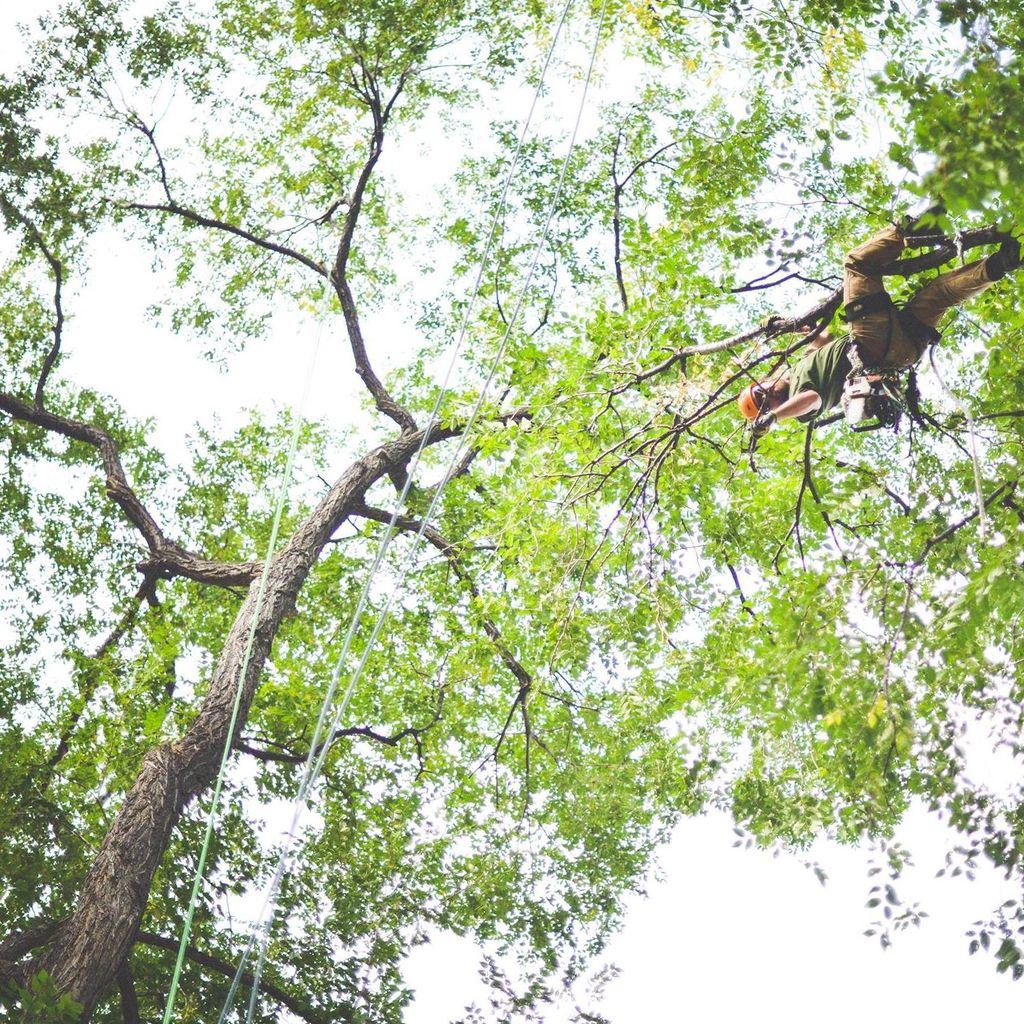 Native Tree Works