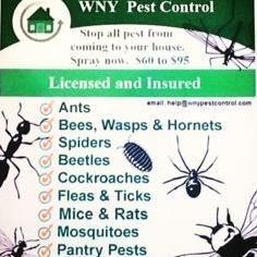 Avatar for WNY Pest Control Buffalo, NY Thumbtack