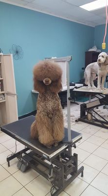 Avatar for Poodle Perfect Pet Styling