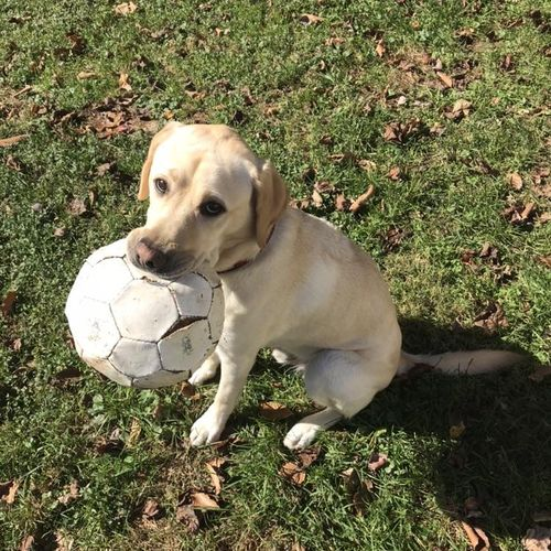 Teddy loves to play soccer to get some of his energy out!