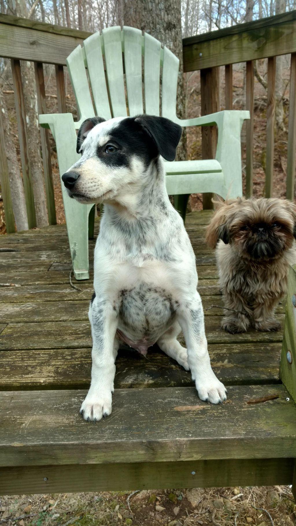 Bluemont Pet Services, Dog Walks