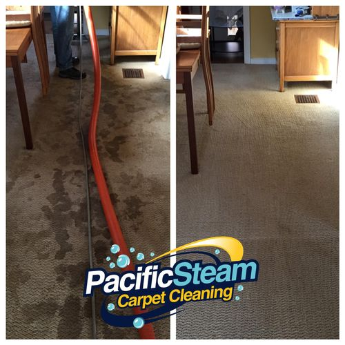 Heavy Pet soiled carpets cleaned up like new.