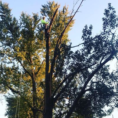 Avatar for Rivera's Tree Service Bellevue, NE Thumbtack