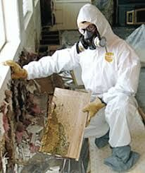 Mold Discovery and Removal