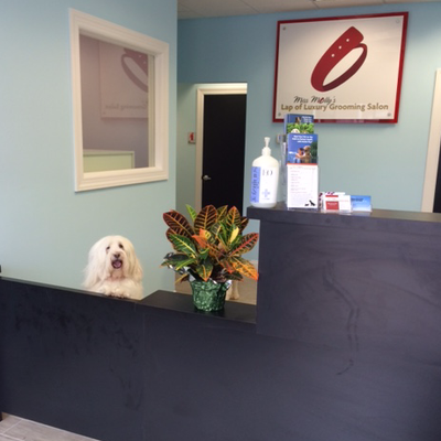 Avatar for Miss Molly's Lap Of Luxury Grooming Salon Englewood Cliffs, NJ Thumbtack