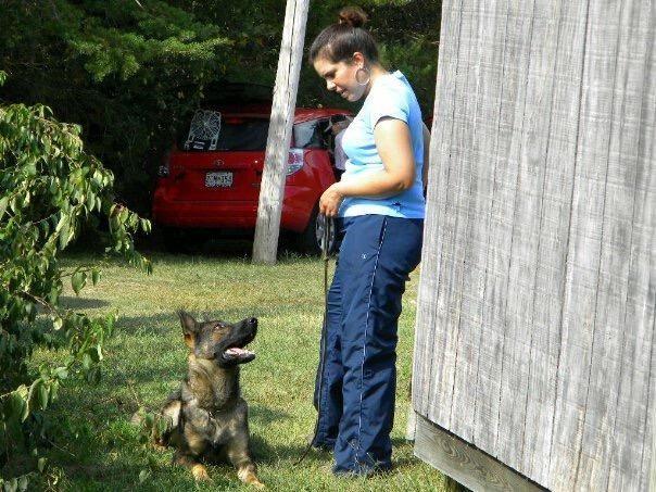 Denise Willis Dog Training, LLC