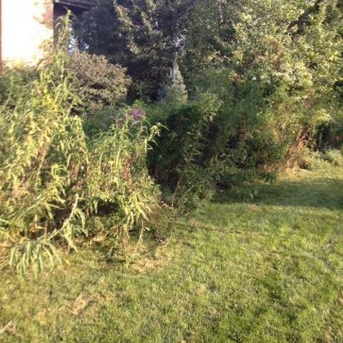 Fence line cleanup before.