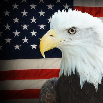 Avatar for American Eagle Properties, inc.