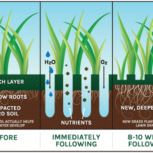 Why Aeration is One of the Best Things You Can Do For Your Lawn