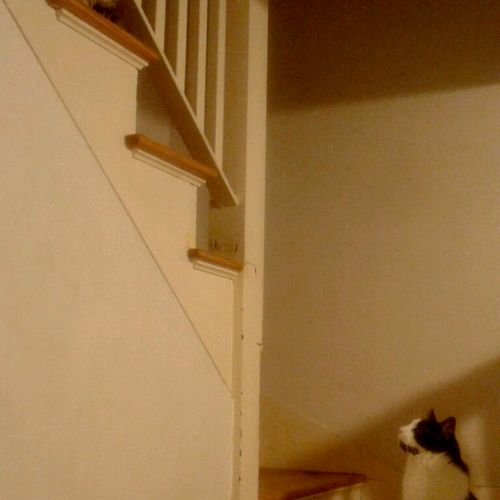 My Cats Taz & BG wait for me as we go up to bed :)