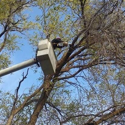 The 10 Best Tree Trimming Services In Meridian Id 2020