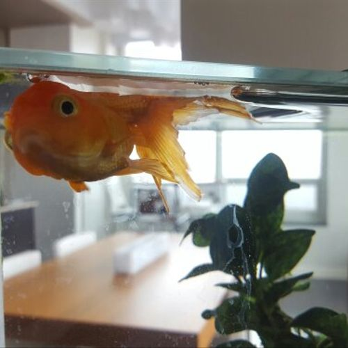 OJ waiting patiently for his favorite fish sitter! :P