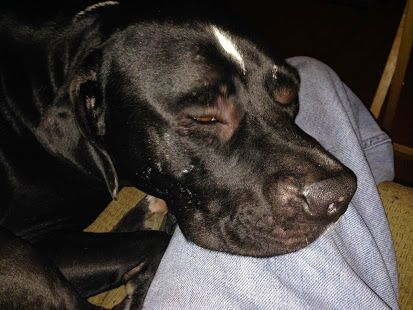 The Hornet's nest was destroyed and removed, but Max and his owner will need a few days to heal fully. (Reston)
