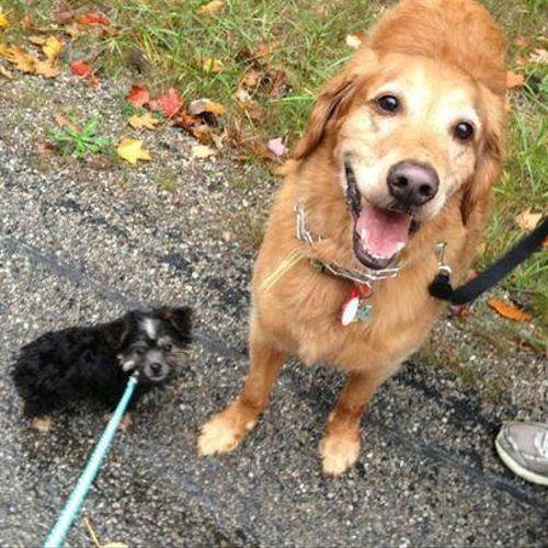 Dog Sitting, Dog Walker, Dog Walking Dallas 75204, 75201, 75214, 75218