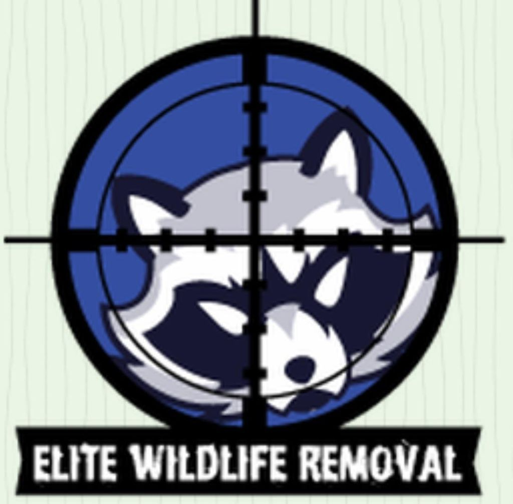 Elite Wildlife Removal