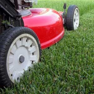 Avatar for Straight Line Mowing