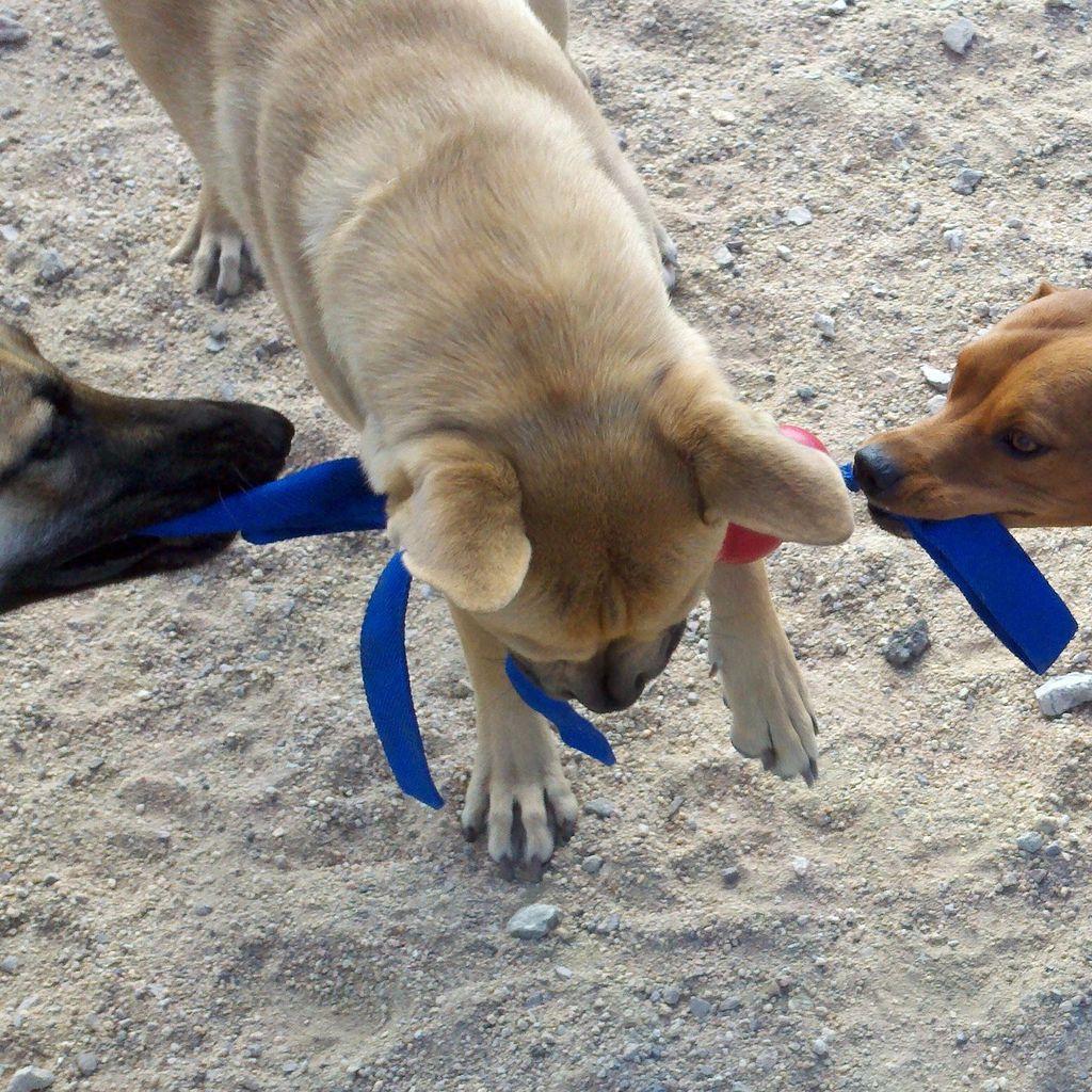 East Coast Dog Whisperer