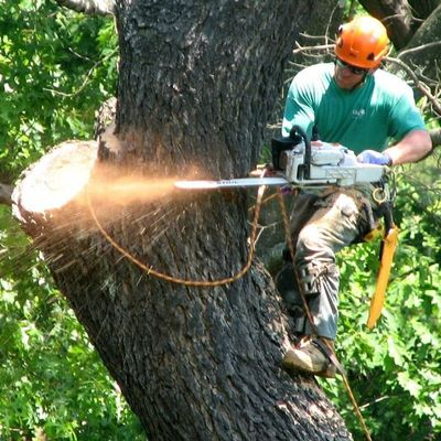 Avatar for Professional Lawn & Tree Service Olathe, KS Thumbtack