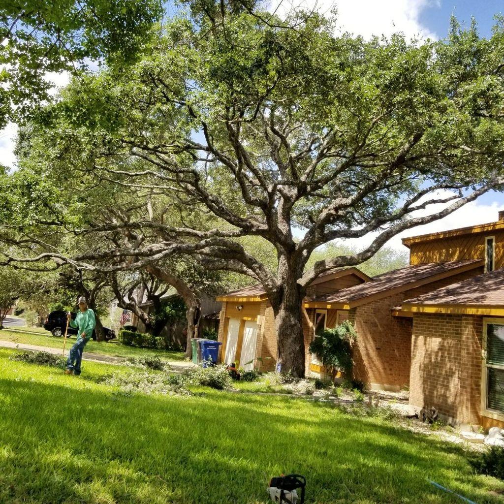 Luna's Tree Service
