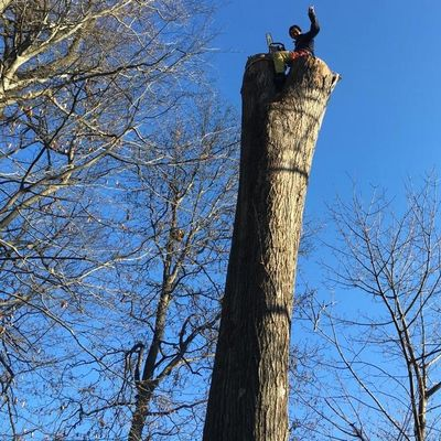 Avatar for MW TREE Service LLC .....license and insurance Gaithersburg, MD Thumbtack