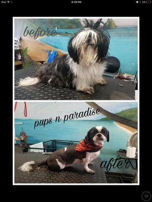 Avatar for Pups N Paradise Jamaica Plain, MA Thumbtack