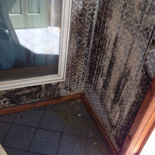 (Ice dam) causing black mold (stachybotrys)