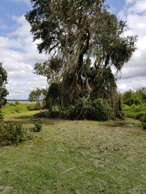 Avatar for Ezee Landscaping Haines City, FL Thumbtack