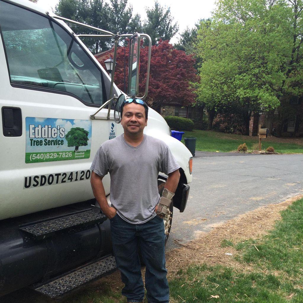 Eddies tree services