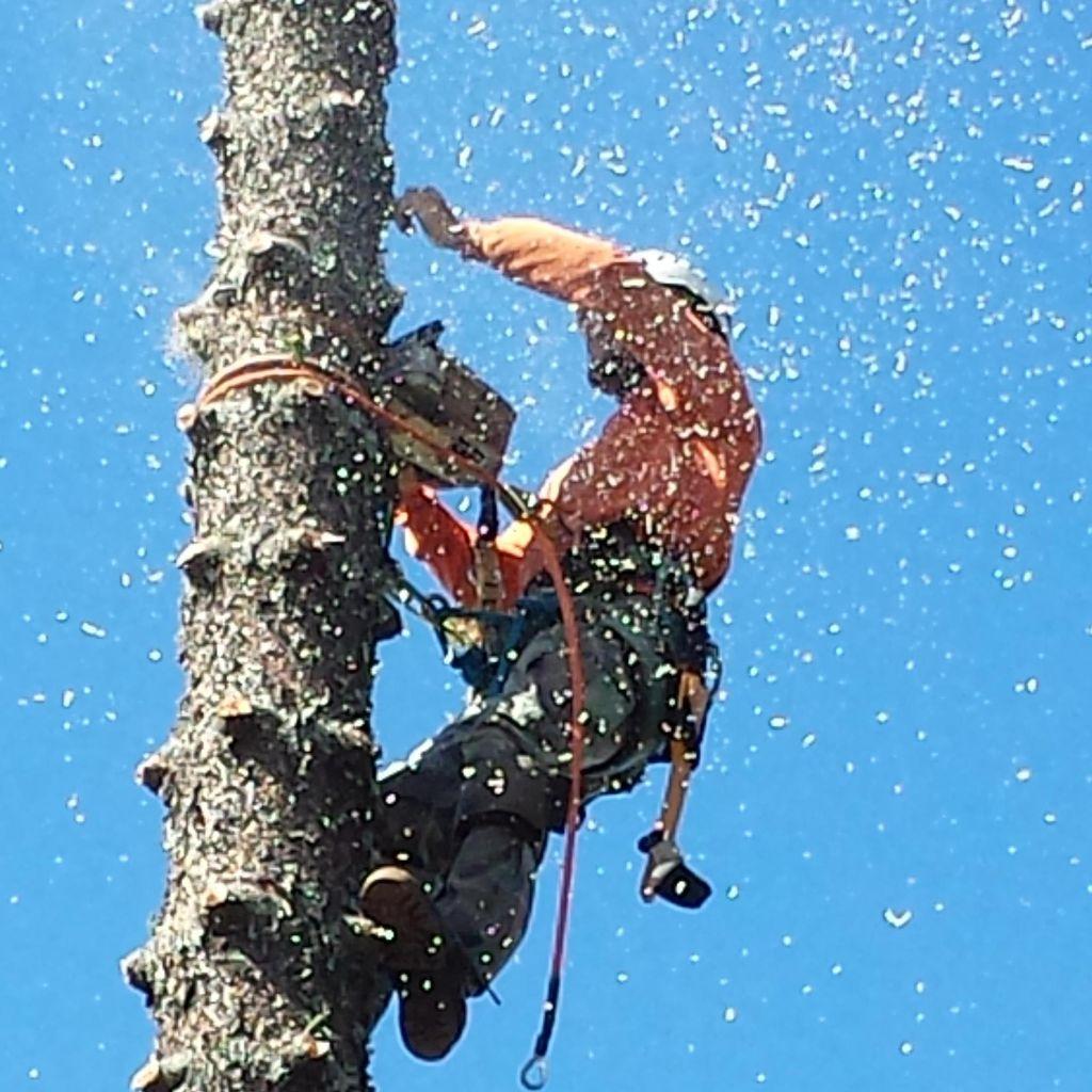Priority Tree Service