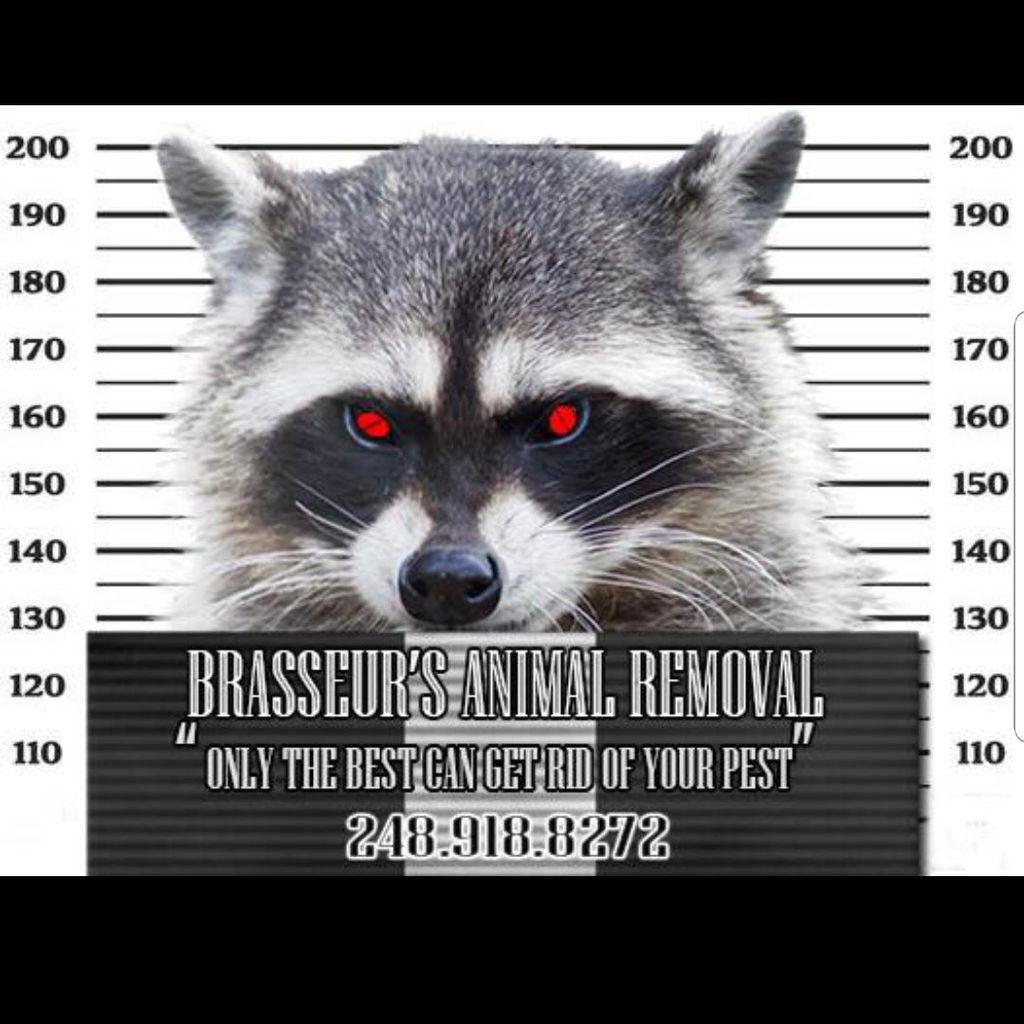Brasseurs Animal Removal