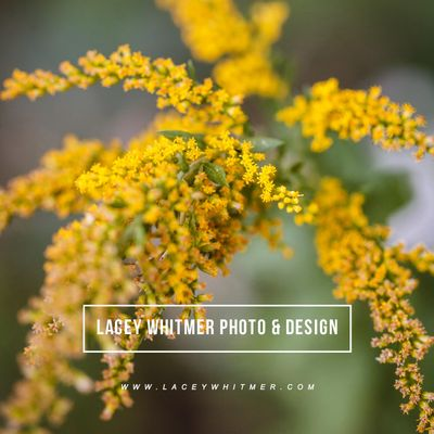 Avatar for Lacey Whitmer Photo & Design Ozark, MO Thumbtack