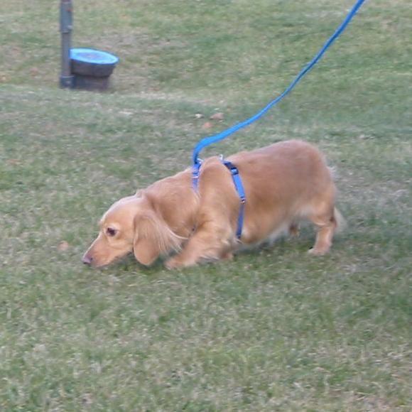 Best Yet Behavior & Dog Training