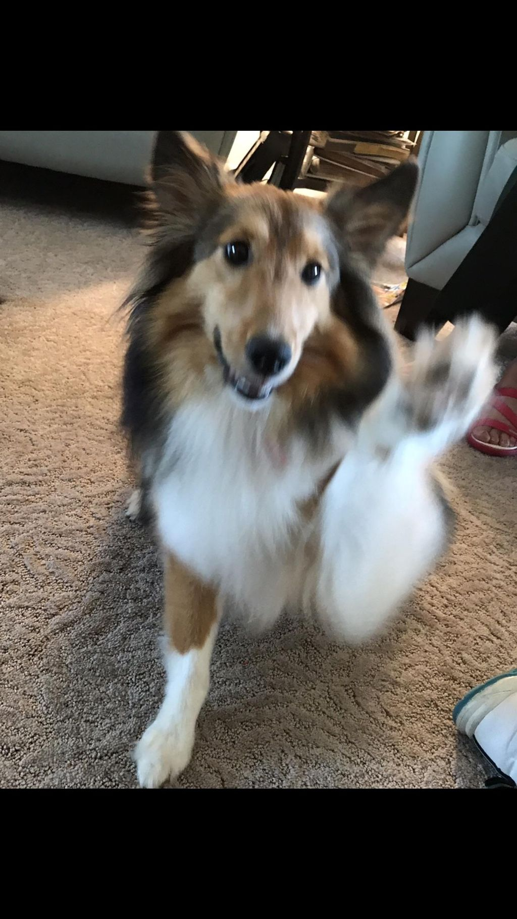 FLORIDA  5-STAR DOG TRAINING LLC
