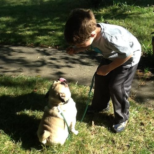 with a little work even children can help with the dog