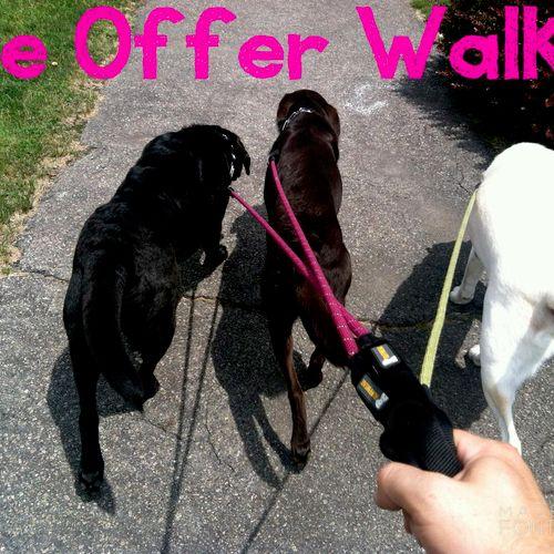 Dog Walking, Dog Walker Dallas, 75219, 75204, 75201